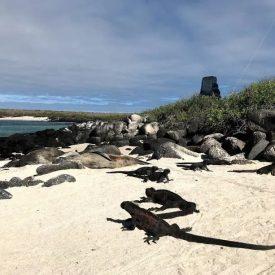 3 REASONS THAT MAKE GALAPAGOS A DREAM DESTINATION 4 - Ecuador & Galapagos Tours