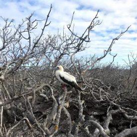 3 REASONS THAT MAKE GALAPAGOS A DREAM DESTINATION 7 - Ecuador & Galapagos Tours