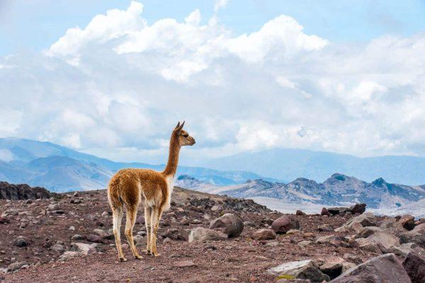 ADORE ECUADOR TRAVEL 32 - Ecuador & Galapagos Tours