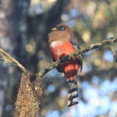 BELLAVISTA CLOUD FOREST 10 - Ecuador & Galapagos Tours
