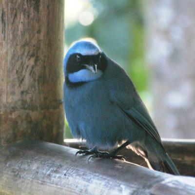 BELLAVISTA CLOUD FOREST 11 - Ecuador & Galapagos Tours