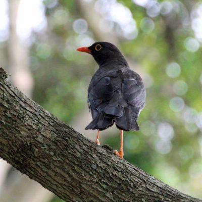 BELLAVISTA CLOUD FOREST 2 - Ecuador & Galapagos Tours
