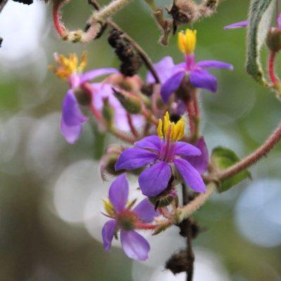 BELLAVISTA CLOUD FOREST 5 - Ecuador & Galapagos Tours