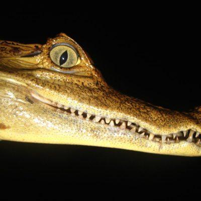 CUYABENO JUNGLE TOUR Animals - Cayman - Ecuador & Galapagos Tours