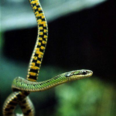 CUYABENO JUNGLE TOUR Animals - Culebra - Ecuador & Galapagos Tours
