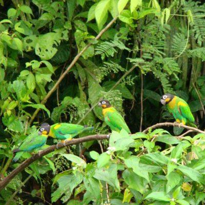CUYABENO JUNGLE TOUR Animals - Parrot - Ecuador & Galapagos Tours