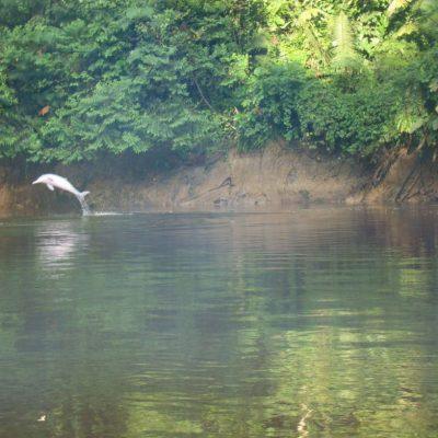 CUYABENO JUNGLE TOUR Animals - Pink dolphin - Ecuador & Galapagos Tours
