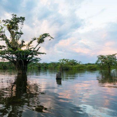 CUYABENO JUNGLE TOUR Surroundings - Laguna Grande - Ecuador & Galapagos Tours