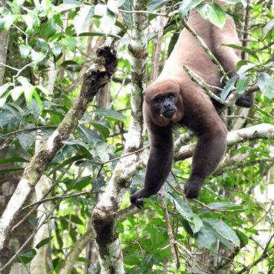 EXPLORING THE AMAZON RAINFOREST IN CUYABENO 1 - Ecuador & Galapagos Tours
