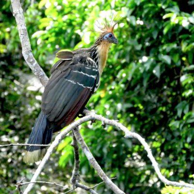 EXPLORING THE AMAZON RAINFOREST IN CUYABENO 3 - Ecuador & Galapagos Tours