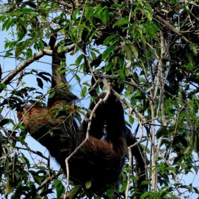 EXPLORING THE AMAZON RAINFOREST IN CUYABENO 4 - Ecuador & Galapagos Tours