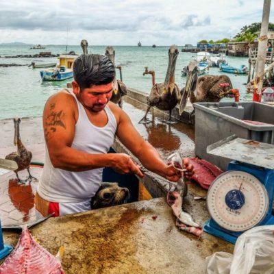 GALAPAGOS ISLAND HOPPING Activity - Fish Market Puerto Ayora - Ecuador & Galapagos Tours