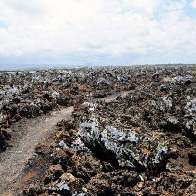GALAPAGOS ISLAND HOPPING Activity - Las Tintoreras - Ecuador & Galapagos Tours