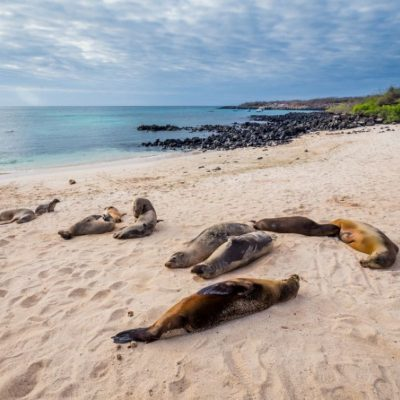 GALAPAGOS ISLAND HOPPING Activity - Playa Mann - Ecuador & Galapagos Tours