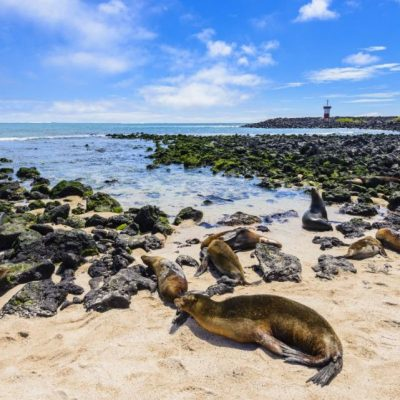 GALAPAGOS ISLAND HOPPING Activity - Punta Carola Fur Seals - Ecuador & Galapagos Tours
