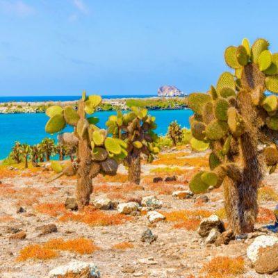 GALAPAGOS ISLAND HOPPING Activity - Santa Fe - Ecuador & Galapagos Tours
