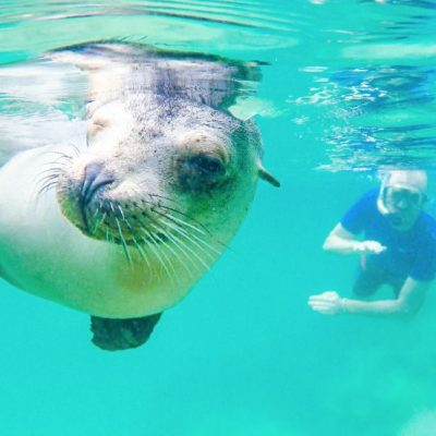 GALAPAGOS ISLAND HOPPING Activity - Snorkeling with Sea Lion - Ecuador & Galapagos Tours