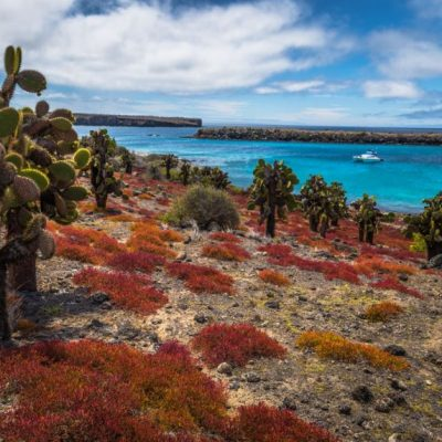 GALAPAGOS ISLAND HOPPING Activity - South Plaza - Ecuador & Galapagos Tours