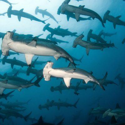 GALAPAGOS ISLAND HOPPING Diving 1 - Ecuador & Galapagos Tours
