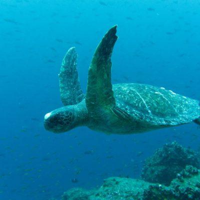 GALAPAGOS ISLAND HOPPING Diving 2 - Ecuador & Galapagos Tours