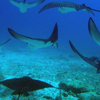 GALAPAGOS ISLAND HOPPING Diving 3 - Ecuador & Galapagos Tours