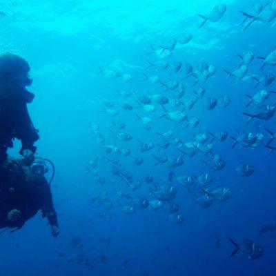 GALAPAGOS ISLAND HOPPING Diving 4 - Ecuador & Galapagos Tours