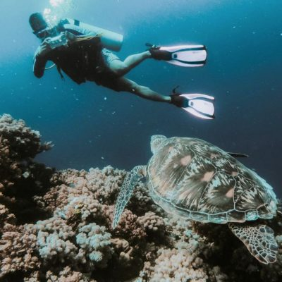 GALAPAGOS ISLAND HOPPING Diving 5 - Ecuador & Galapagos Tours