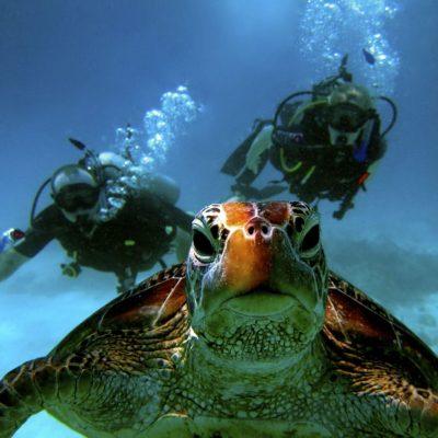 GALAPAGOS ISLAND HOPPING Diving 6 - Ecuador & Galapagos Tours