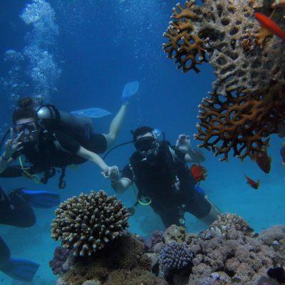 GALAPAGOS ISLAND HOPPING Diving 7 - Ecuador & Galapagos Tours
