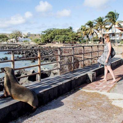 GALAPAGOS ISLAND HOPPING Town - San Cristobal Port - Ecuador & Galapagos Tours