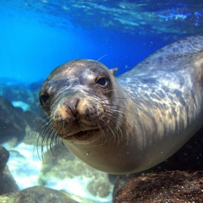 GALAPAGOS ISLAND HOPPING Wildlife - Sea Lion 1 - Ecuador & Galapagos Tours