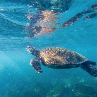 GALAPAGOS ISLAND HOPPING Wildlife - Sea Turtle - Ecuador & Galapagos Tours