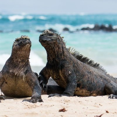 GALAPAGOS ISLAND HOPPING Wildlife - Sea iguana - Ecuador & Galapagos Tours