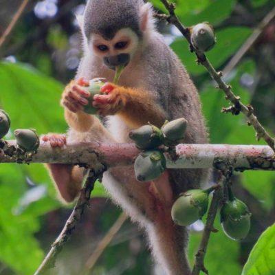 MY JUNGLE TRIP TO CUYABENO 10 - Ecuador & Galapagos Tours