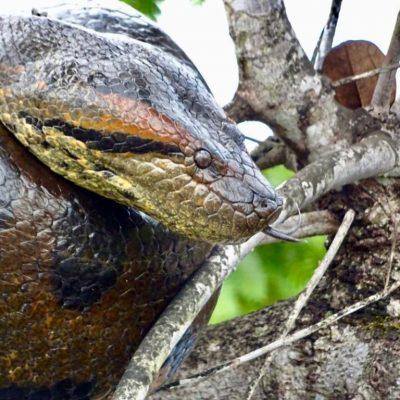MY JUNGLE TRIP TO CUYABENO 2 - Ecuador & Galapagos Tours