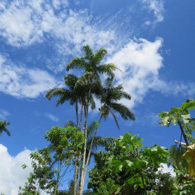 MY JUNGLE TRIP TO CUYABENO 5 - Ecuador & Galapagos Tours