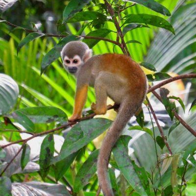 ROUND TRIP 24 - Ecuador & Galapagos Tours