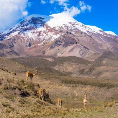 ROUND TRIP 35 - Ecuador & Galapagos Tours