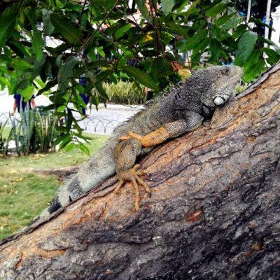 ROUND TRIP 51 - Ecuador & Galapagos Tours