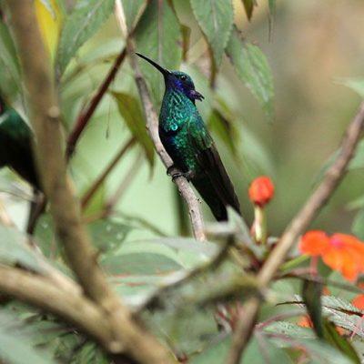TENA JUNGLE TOUR 12 - Ecuador & Galapagos Tours