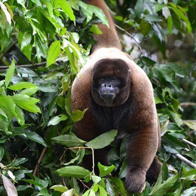 TENA JUNGLE TOUR 22 - Ecuador & Galapagos Tours