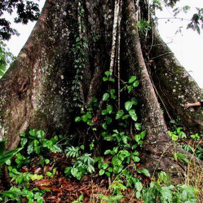TENA JUNGLE TOUR 4 - Ecuador & Galapagos Tours