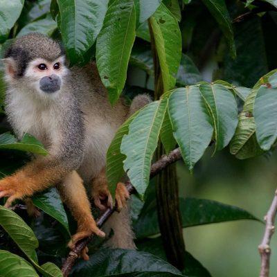 YASUNI JUNGLE TOUR 2 - Ecuador & Galapagos Tours
