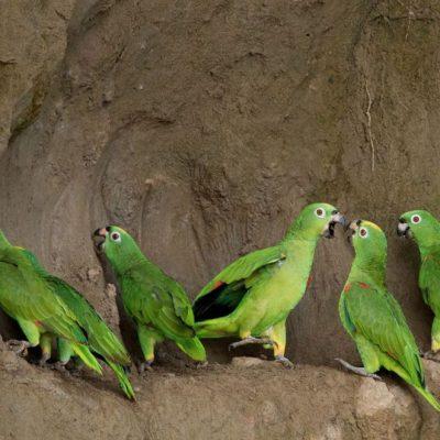 YASUNI JUNGLE TOUR 6 - Ecuador & Galapagos Tours